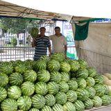 Узбекские арбузы